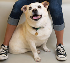 Volunteer-East-Bay-SPCA