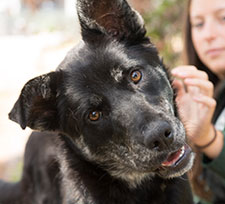 Featured-EastBaySPCA