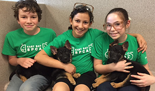 Youth Volunteers East Bay SPCA